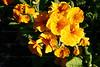 CRay-Flowers-0002