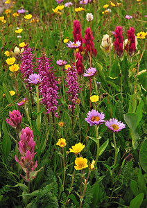 Porphyry Bouquet