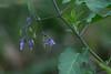 Flowering Vine