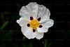 CRay-Flowers-6979