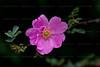 CRay-Flowers-0782