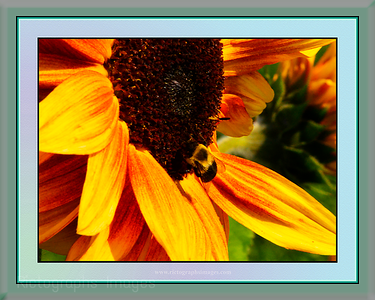 bee Friendly, Canada, Rictographs Images
