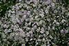 CRay-Flowers-0711