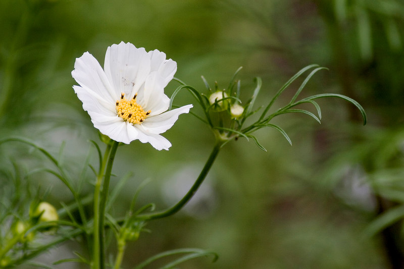 Flower_MG_4045