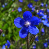 Blue flower with pearly center - 125