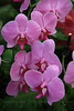 SF Flowers
