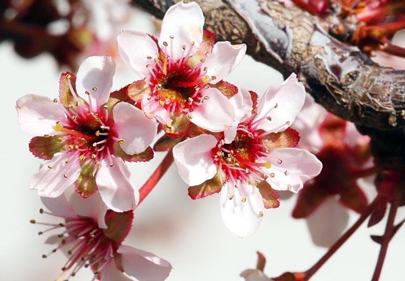 Flower_1547