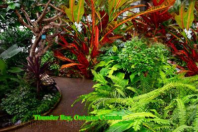 Thunder Bay's Centennial Botanical Conservatory