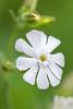 flower smugmug (10 of 26)