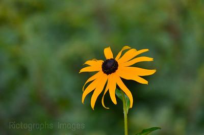 Forest Wildflower