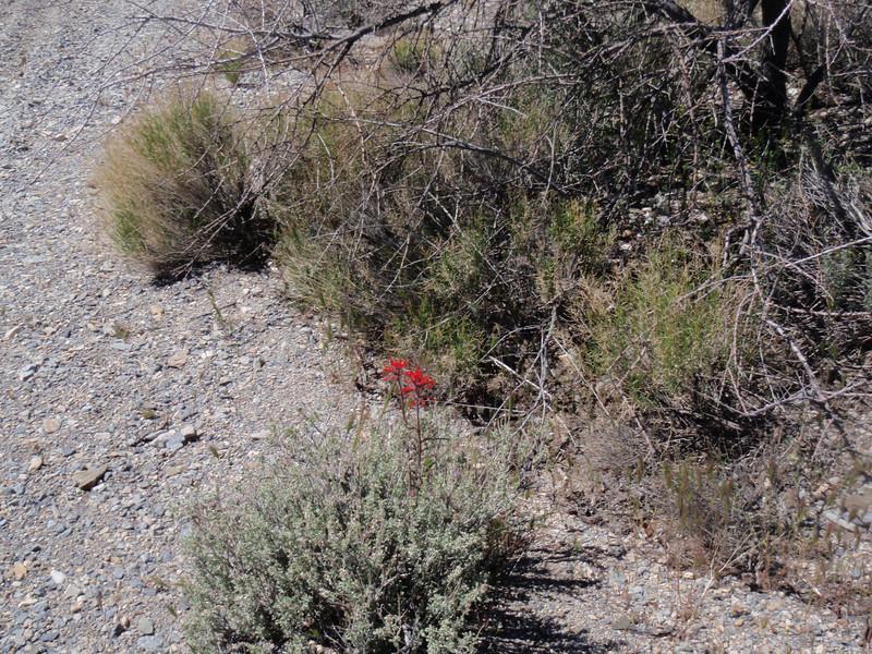 California desert April 2011