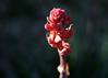 1823 - Cactus Flower