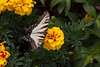 20060904-132958_30D_Flowers_0115