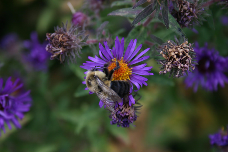 Dinner of the Bumblebee