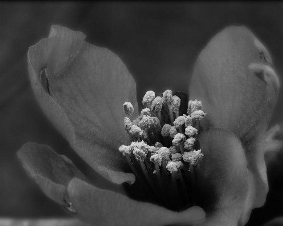 FlowerBW