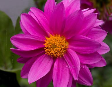 Pink Flower 3401 2