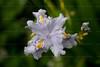 CRay-Flowers-0706