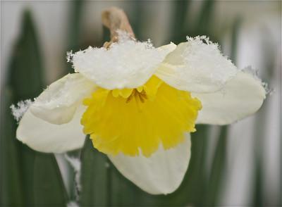 Flowers & snow