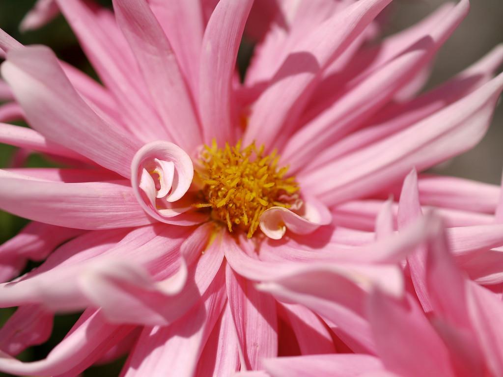 Nursery in Half Moon Bay Pink Flower