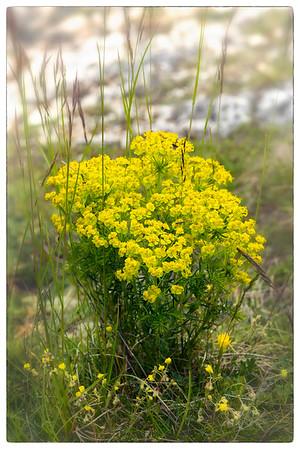 Gelber Wildblumenstrauß