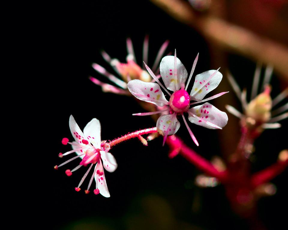 IMAGE: https://photos.smugmug.com/Flowers/Flowers/i-wfhQh6K/0/ccdd3b70/XL/Flowers_IMG_2857-XL.jpg