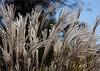 0654 - Grass