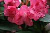 CRay-Flowers-0722