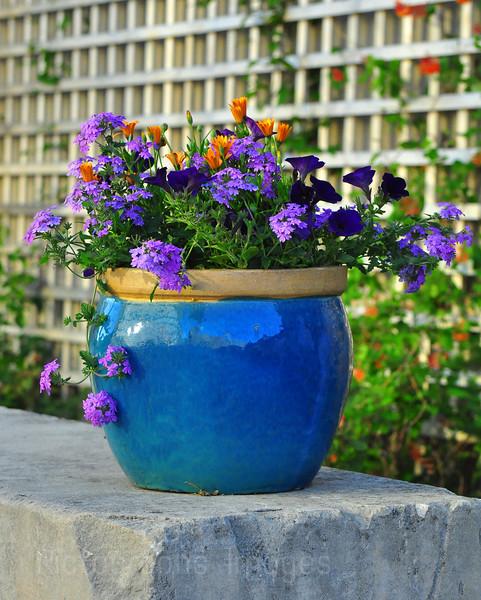 Blue Flowerpot, With Beautiful Flowers.