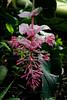 CRay-Flowers-0797