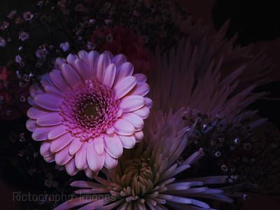 Art Decor Flowers