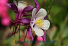 2522 - Flower