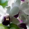 US Botanic Garden-5