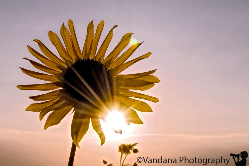 July 2, 2007 - Sun-flower-star