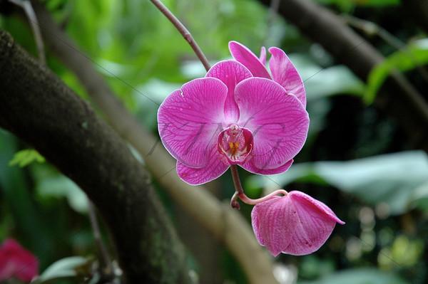 Blissful Petals