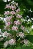 CRay-Flowers-0764