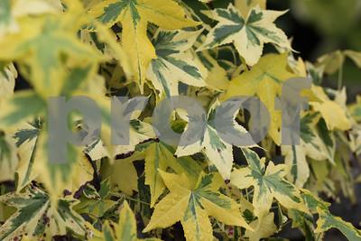 Wonderful leaves