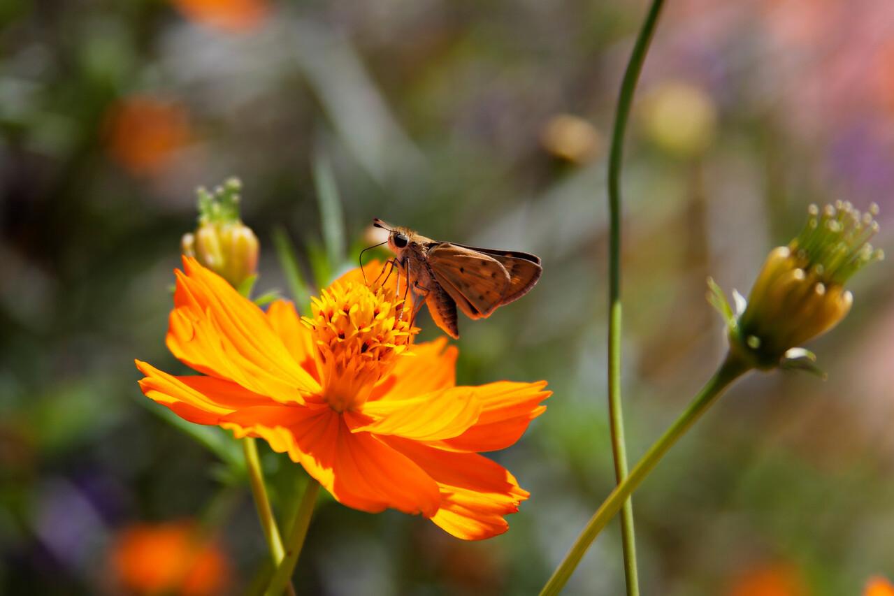 Moth Jewell Box  8 16 026