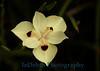 1540 - Flower