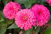 Flowers_MG_5363 copy
