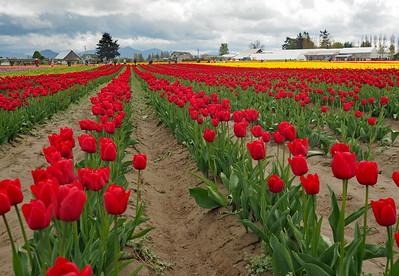 2017 Tulip Town