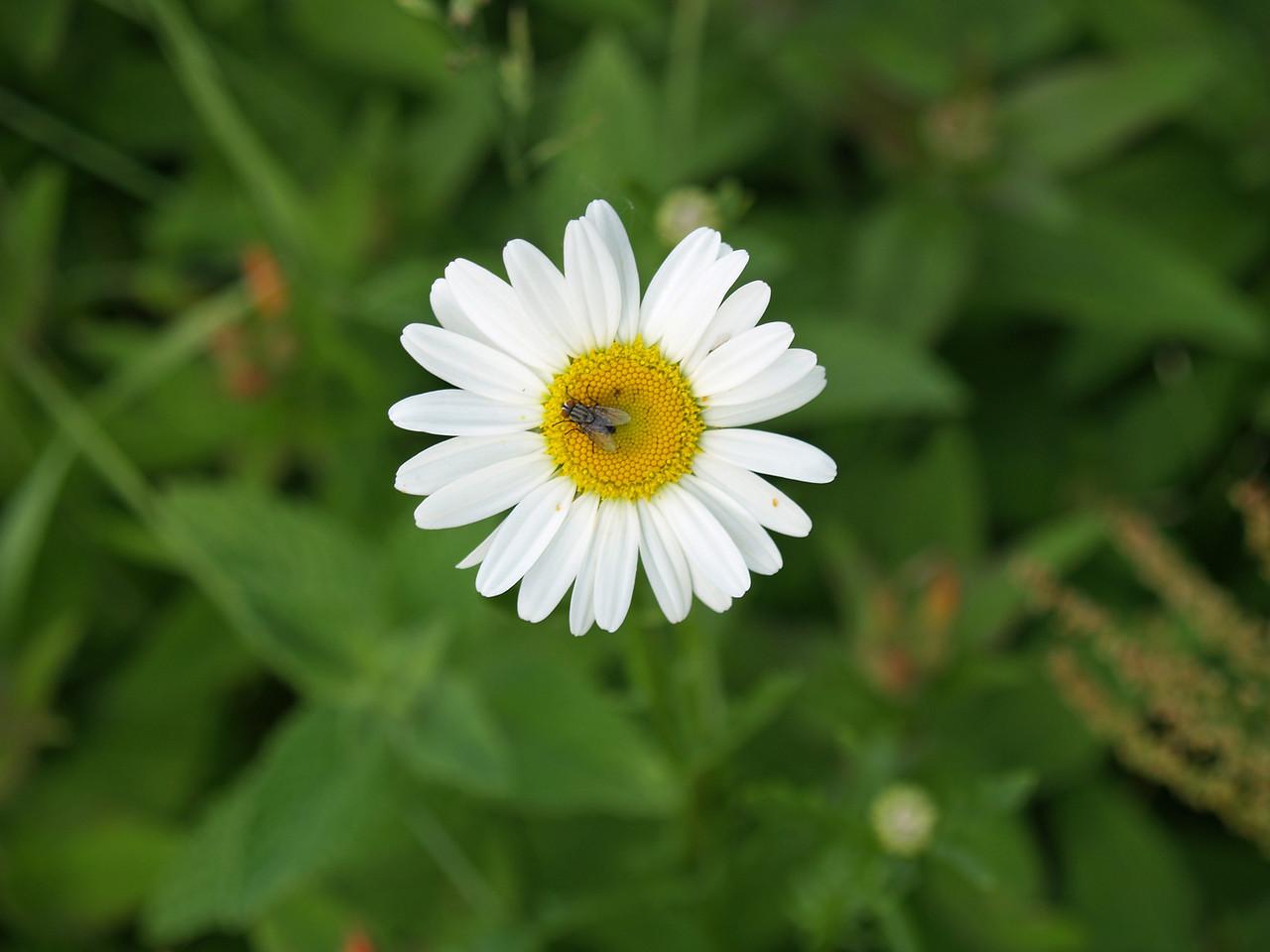 2314flyonflower