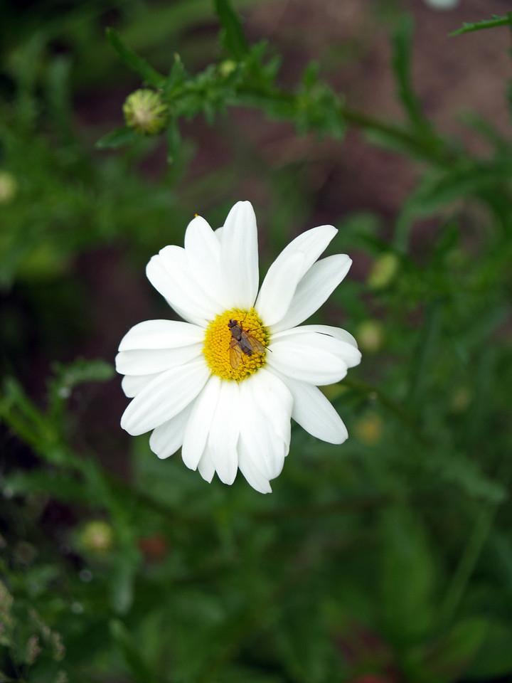 2305flyonflower