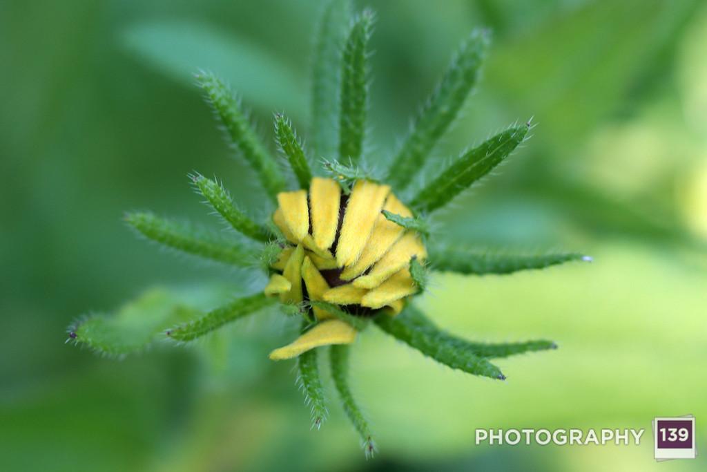 The Incidental Gardener Files