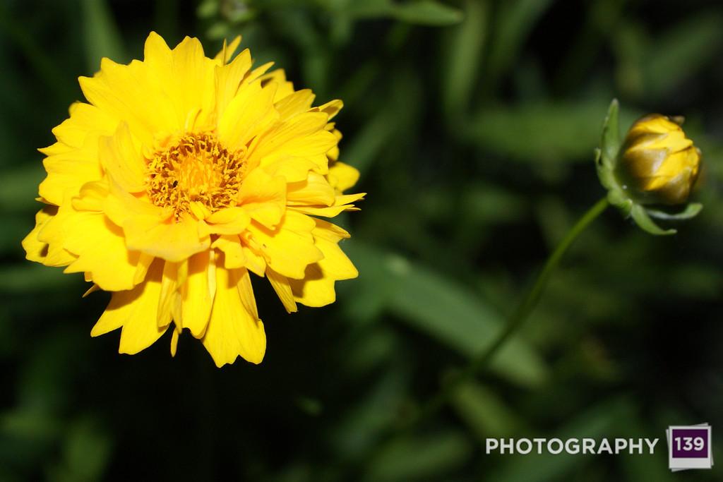 Night Flower 2