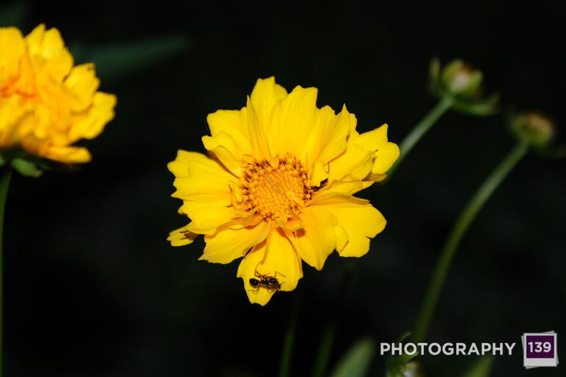 Night Flowers 1
