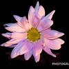 Weekly Photo Challenge Plant Alternates