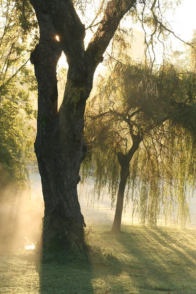 Willow's Weep<br /> On a cold November morning, the mist clung to the willow like a young one to its mother, hiding behind the trunk. The new warmth of the sun put the mist to sleep. Soon the mist was gone and the willow wept drops of dew for its sometime friend.