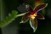 Frog Princess<br /> <br /> Flower pictured :: Orchid<br /> <br /> 100612_003056 ICC sRGB 12in x 18in pic