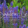 Petoskey Photographer - Sandra Lee Photography #119      Also serving Harbor Springs and all of Northern Mi