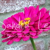 Petoskey Photographer - Sandra Lee Photography #112      Also serving Harbor Springs and all of Northern Mi